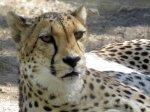 صور طبيعية ساحرة أجمل الصور الطبيعية وحيوانات
