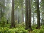أجمل المناظر الطبيعية  غابات ومنازل وسط الغابات   نتمتع بجمالها الساحر
