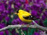 3dlat.net 15 15 8b29 n4hr 128412717921 150x113 اروع صور للطيور2017