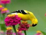 402482 bigthumbnail 150x113 اروع صور للطيور2017