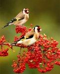 Beautiful Birds photo1 768x956 121x150 اروع صور للطيور2017