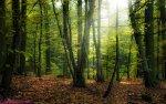 صور لنور الشمس عند الشروق سبحان الله الخالق  جمال الطبيعة منظر مريح جدا