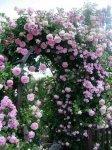 اجمل صور حدائق ورود رومانسية طبيعية  بالوان متعدده2017  تبعث الراحه