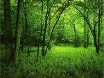 elmstba.com 1457069811 294 150x113 اجمل مناظر طبيعية فى العالم 2017 صور مناظر طبيعيه خضراء HD خلفيات خلابة جميلة جداً 2018