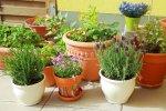 أمراض وآفات النباتات المنزلية ونباتات الزينة وطرق رعايتها