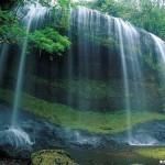 صور طبيعية للورد , صور منازر طبيعية , صور مناظر طبيعية