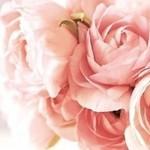 مجموعة من اجمل صور الفيس بوك ورد 2014  ورود رومانسية للبنات 2015