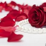 صور ورد احمر جميل كشخه ورود حمراء روعة 2014 , اجمل الورد الرومانسى خقق