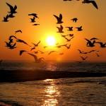 أجمل صور الصباح – مناظر طبيعية رائعة لشروق الشمس بجودةhd ونقاء عالى
